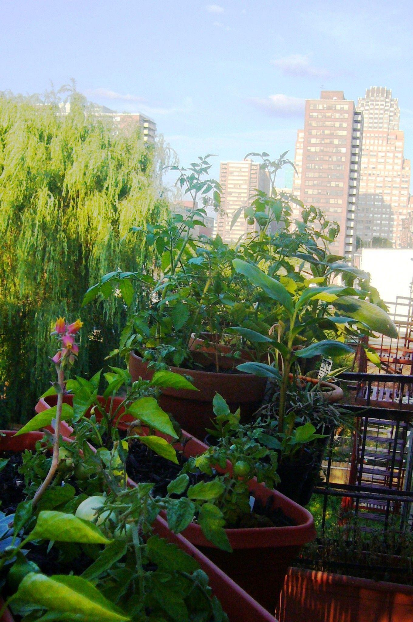 Fire Escape Garden In Jersey City Nj Grove Design Grovedesign Www Grovedesignstudio Com Container Gardening Urban Garden Plants