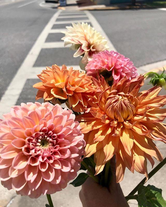 Dahlias Flower Truck Dahliasflowertruck Instagram Photos And Videos Flower Truck Dahlia Flower Flowers
