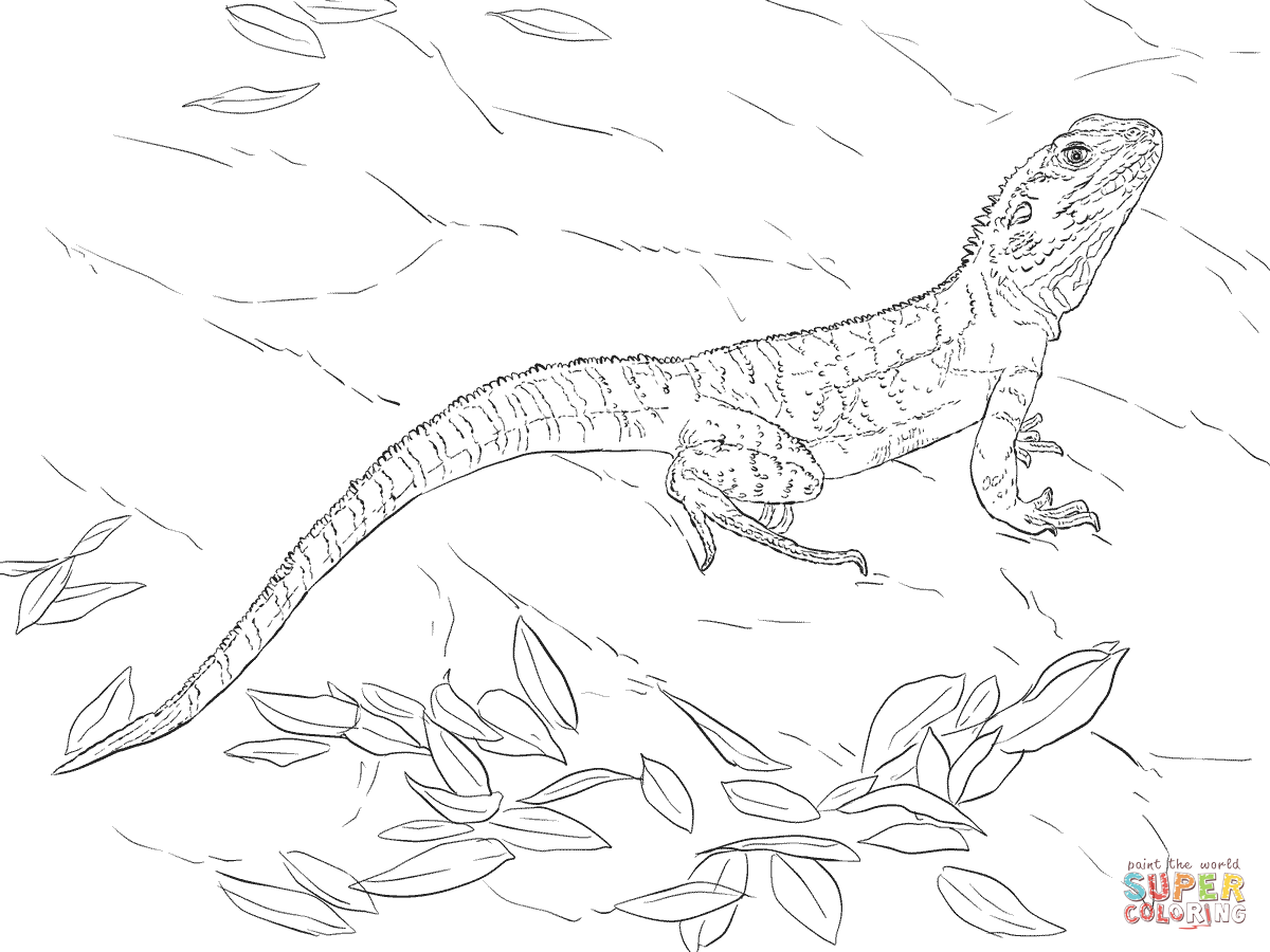 Australian Water Dragon Coloring Page Supercoloring Com Dragon Coloring Page Animal Templates Animal Coloring Pages