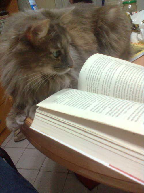 Smart cat.