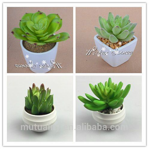 ... Succulent Plant For Decorations,Artificial Small Potted  Plant,Artificial Cactus Bonsai For Office Desk Decoration,Office Table  Decoration Bonsai Potted ...