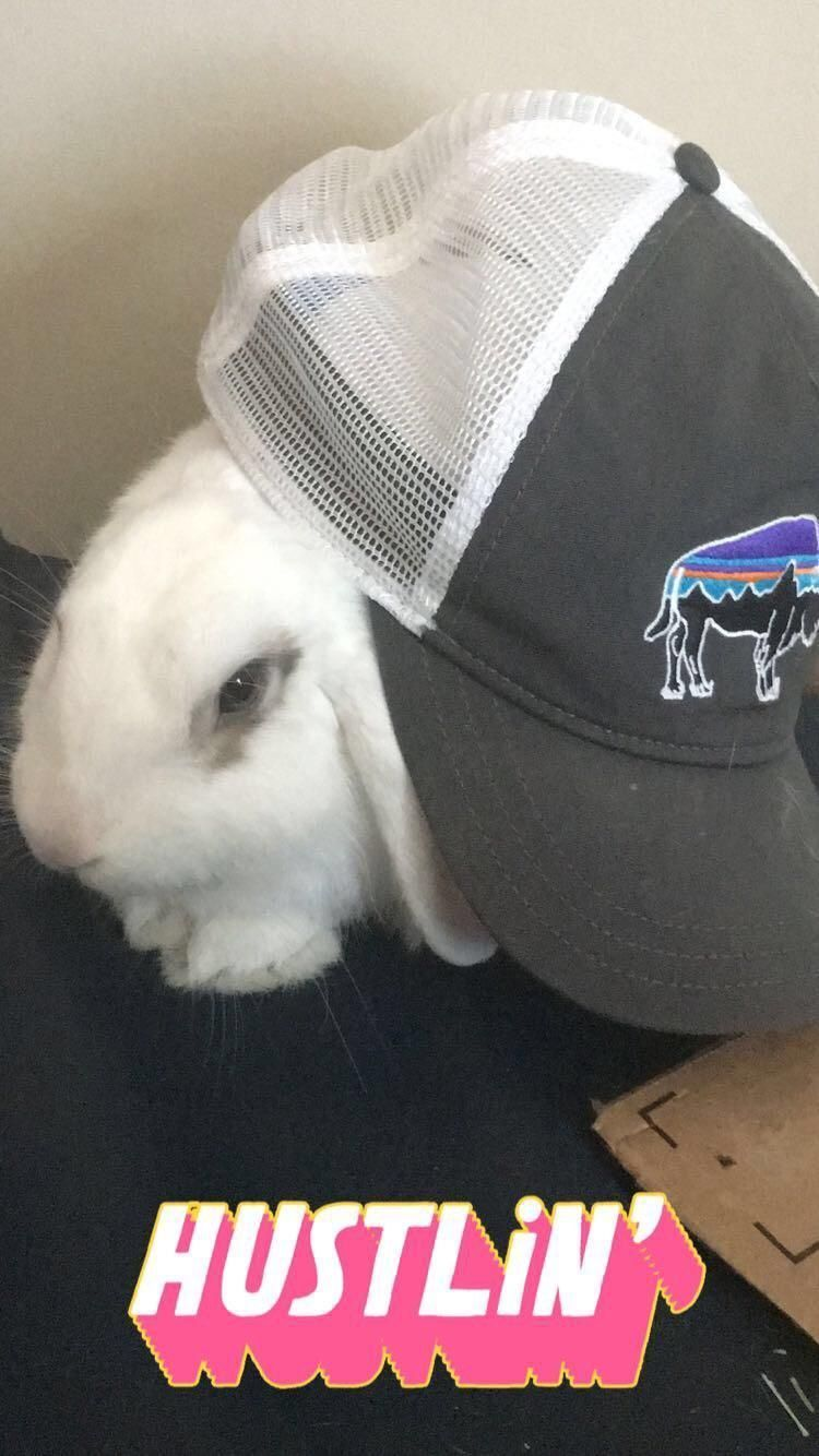 What to Buy Next for Your Bunny Rabbit!-     Burboun is a trap god – Rabbit bu... ,  #Bunny #Burboun #buy #god #Rabbit #RabbitHutchesIdeas #trap