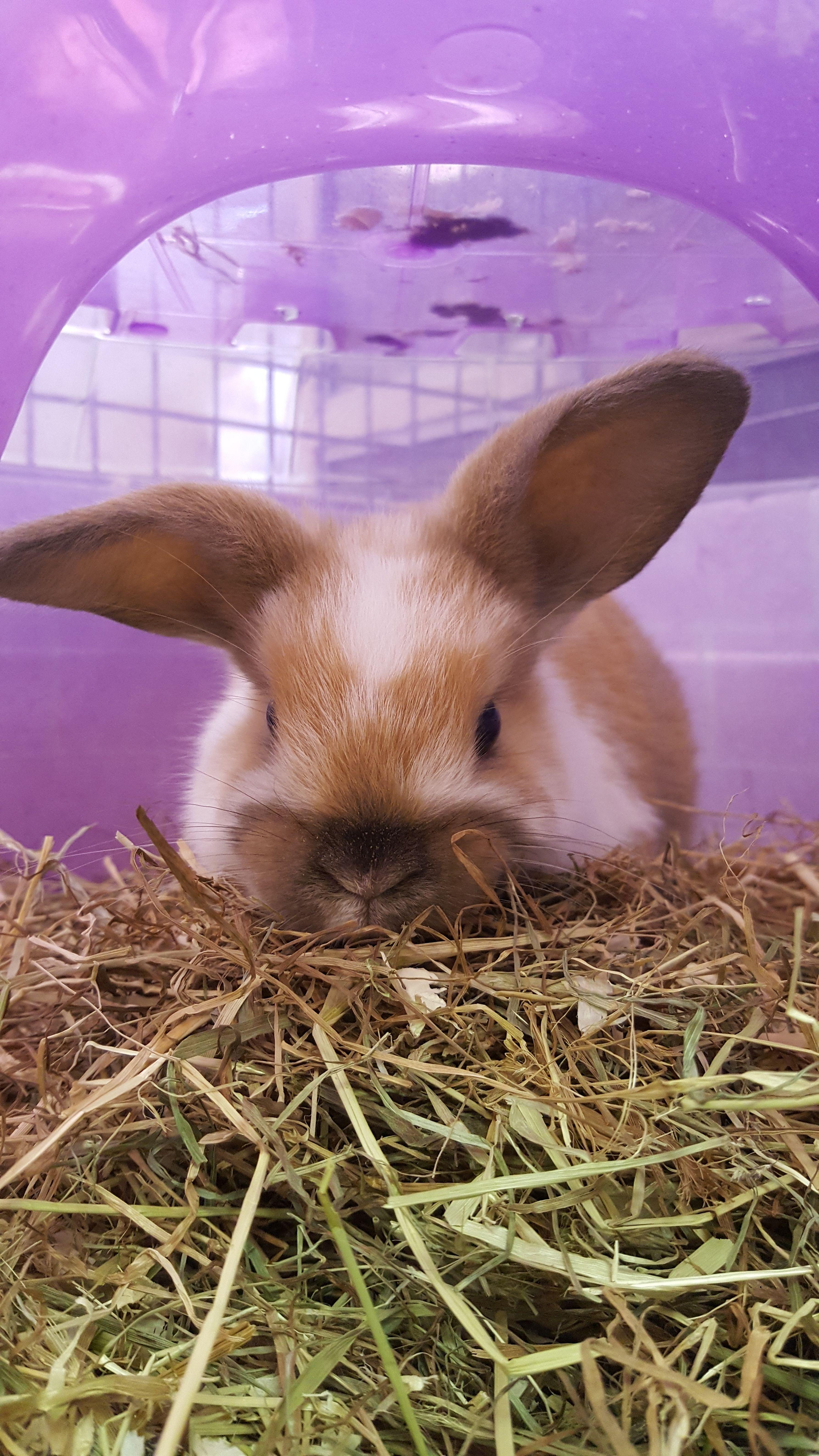 Rabbits At Www Ponderosapetshop Co Uk Pet Birds Pet Shop Food Animals