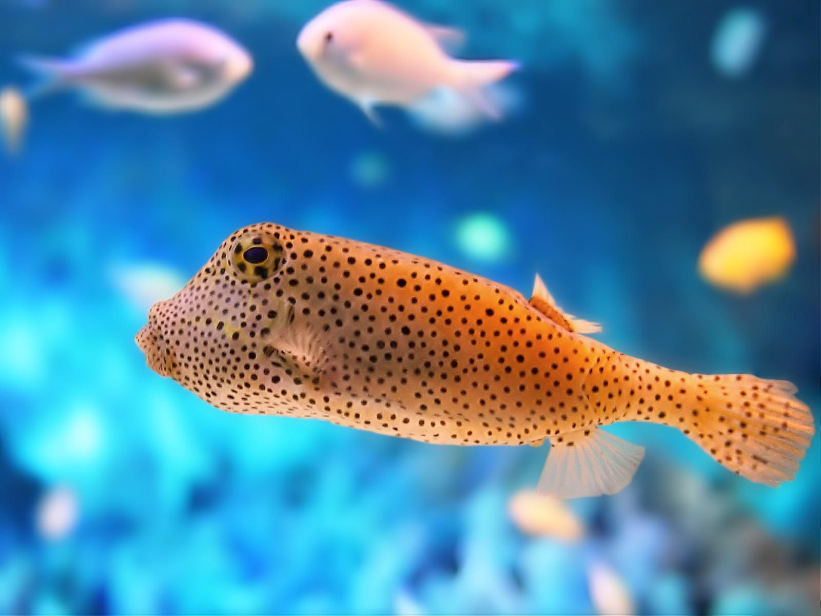 Amazing HD Sea Fish Wallpapers Collection. - Remix Video