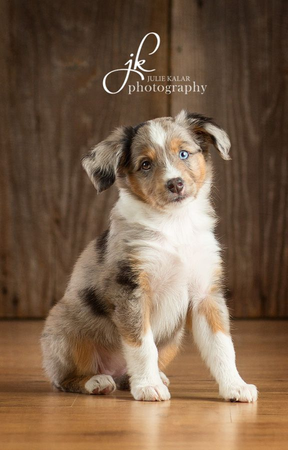 Welker Photography, Boise Idaho's Pet photographers loves this image. my next door dog looks like this one. Just beautiful! Welker Photography, Boise Idaho's Pet photographers loves this image.