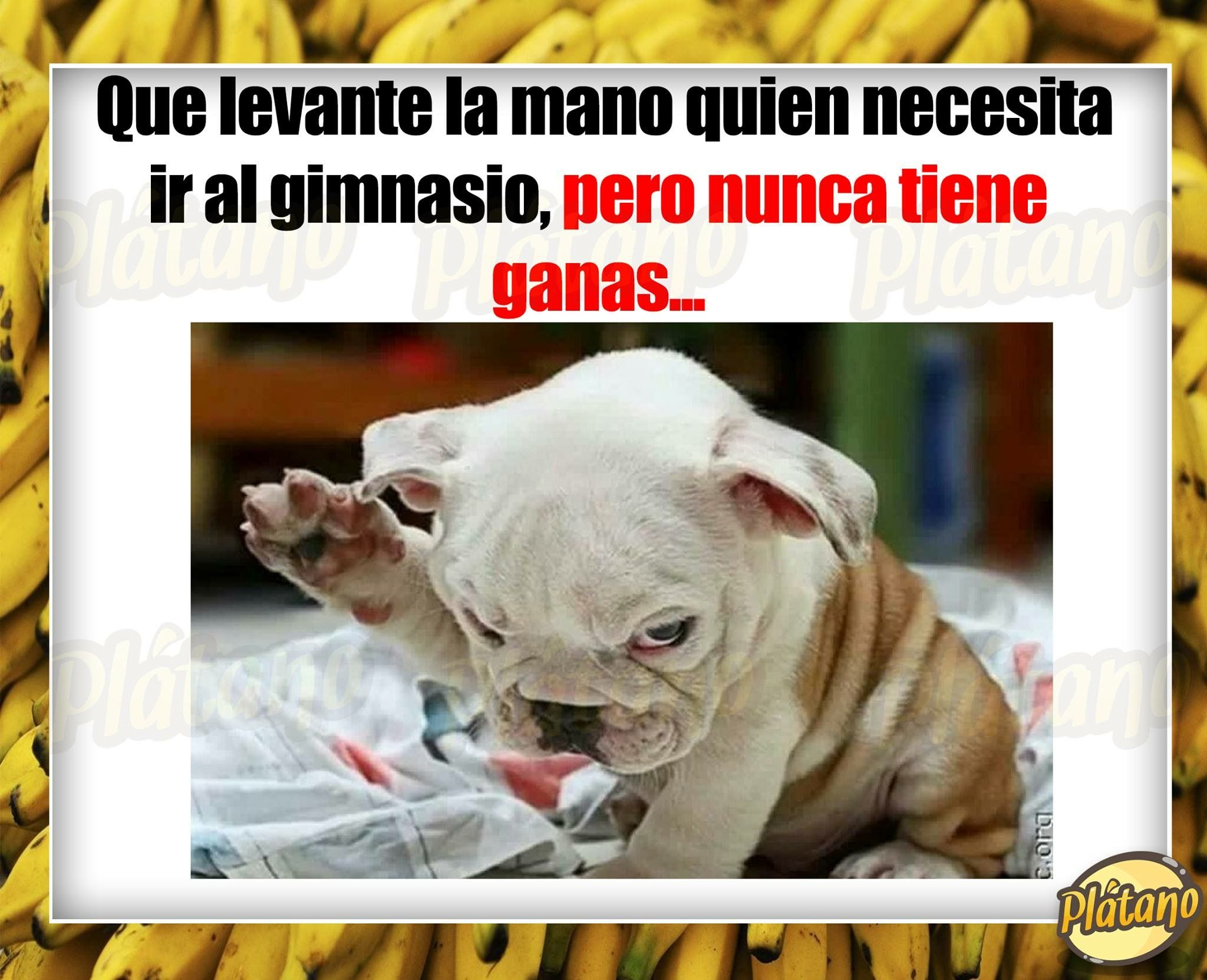 Pin By Violeta On Perros Funny Memes Memes Funny