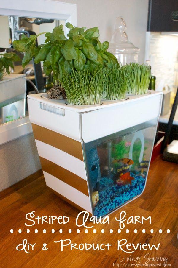 Aqua farm living savvy simple diy product review for Hydroponic aquarium with fish