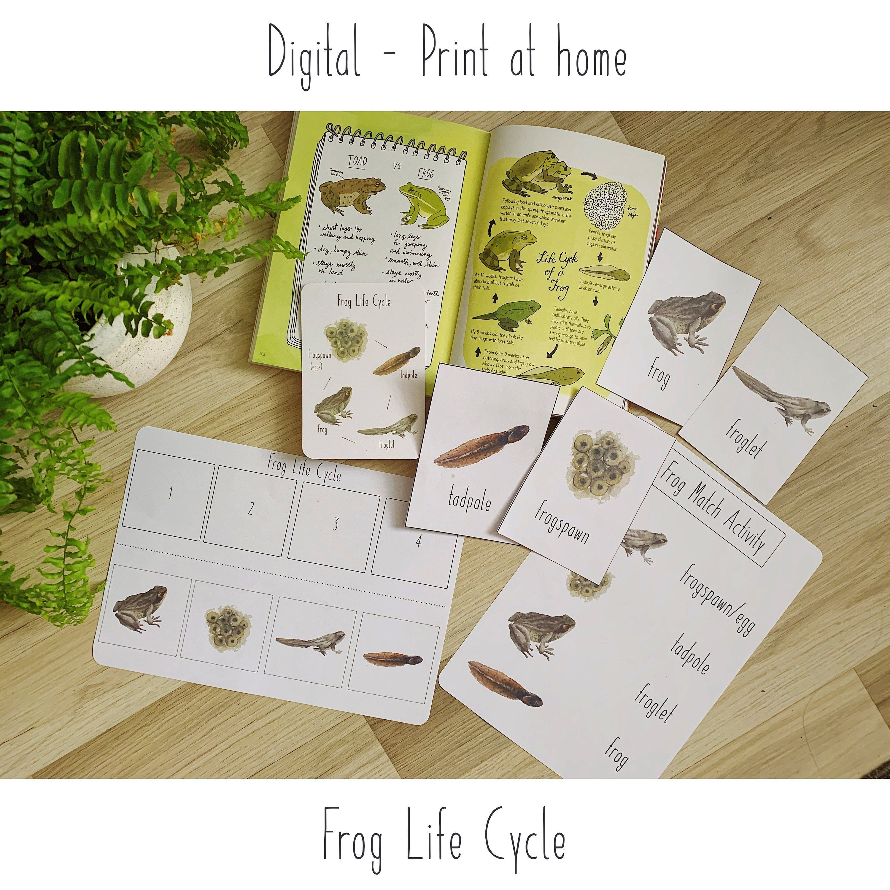 Frog Life Cycle Nature Study Montessori Materials Home