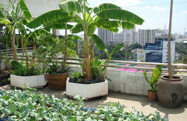 Start A Refreshing Rooftop Kitchen Garden In 2020 Roof Garden Design Terraced Vegetable Garden Roof Top Garden Design