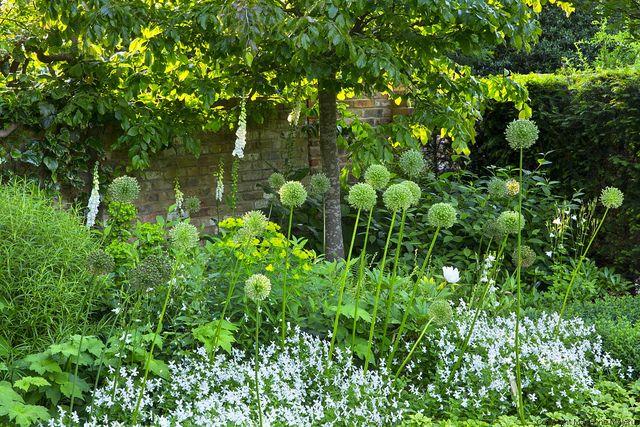 Formal structural garden viola cornuta and alliums for Structural plants for small gardens