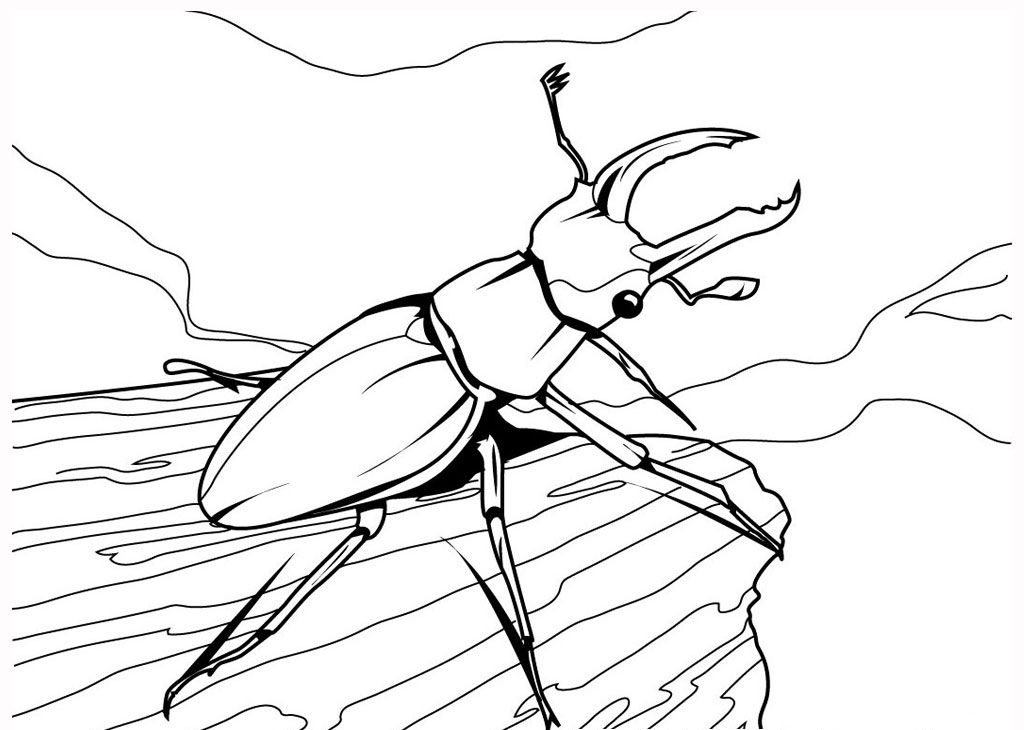 beetle realistic insect coloring pages httpwwwkidscpcom