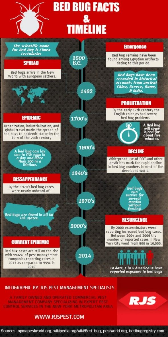 infographic detective bedbug skin bed bug facts to your forensic category bugs make full crawl