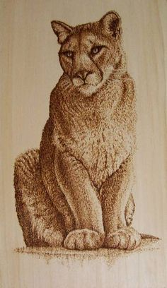 exceptional Pyrography | Female Mountain Lion