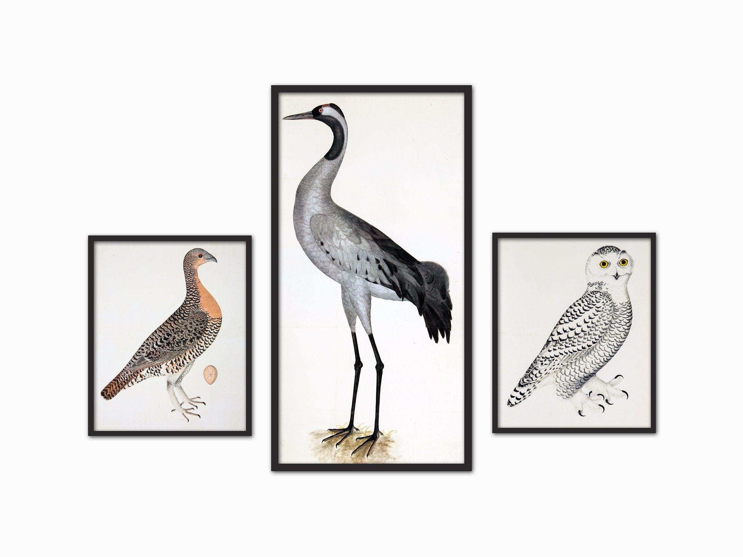Large Birds Print Set Of 3 Bird Wall Decor Heron And Owl Etsy In 2020 Antique Bird Illustration Bird Prints Bird Illustration