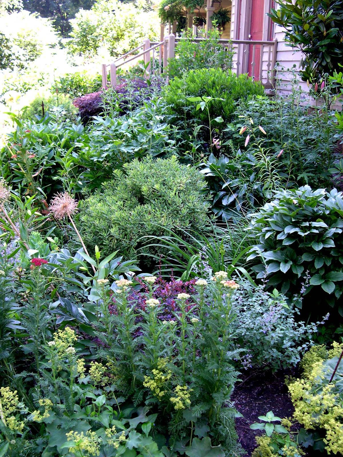 House beds 2 , mixed borders Woodhull Hedge Gardens ...