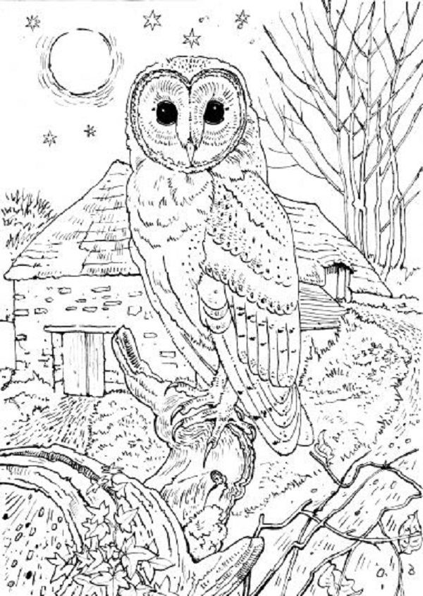 Colouring Pages British Birds Owl Coloring Pages Detailed Coloring Pages Animal Coloring Pages