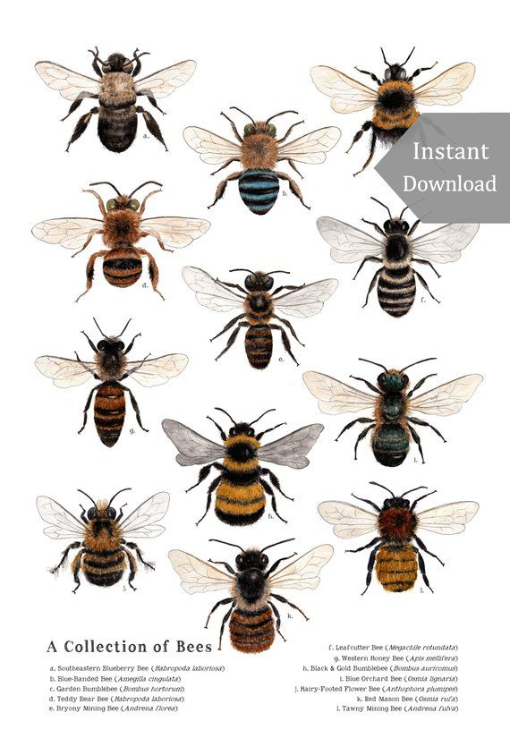 Digital Poster Download A Collection Of Bees 12 X 18 Or 11 X 17