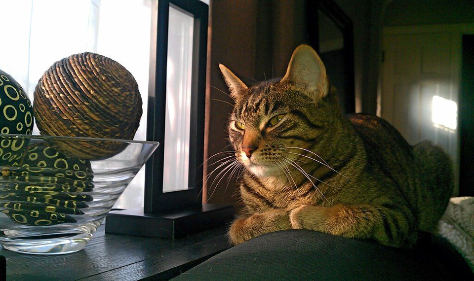 hubby's cat, Kat.
