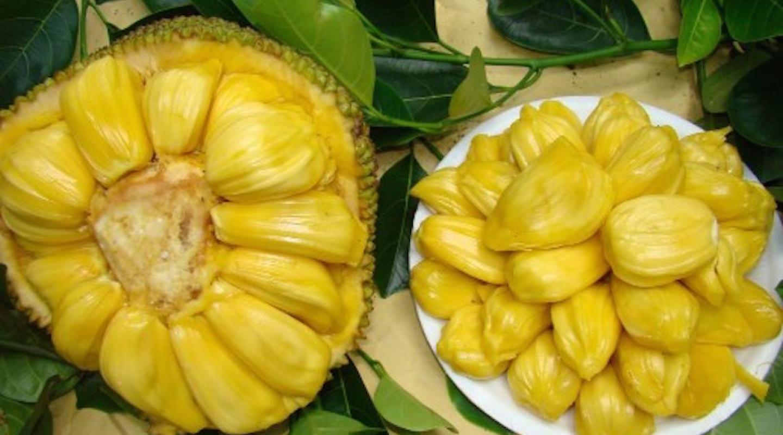 """World Largest Tree Fruit-""""Honey"""" Jackfruit Fresh 5 Finest seeds"""