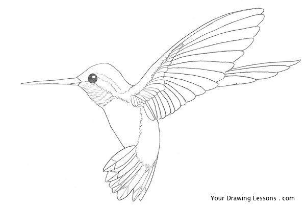 hummingbird drawing - Google Search | Hummingbirds in 2018 ...