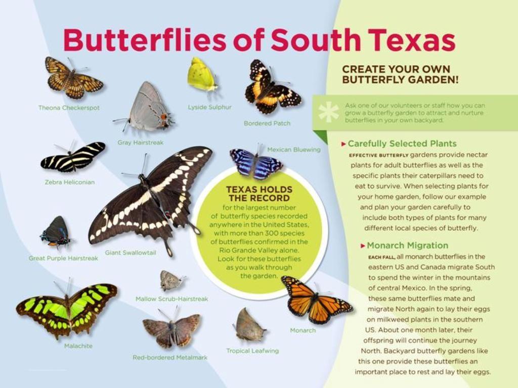 Butterflies Of South Texas