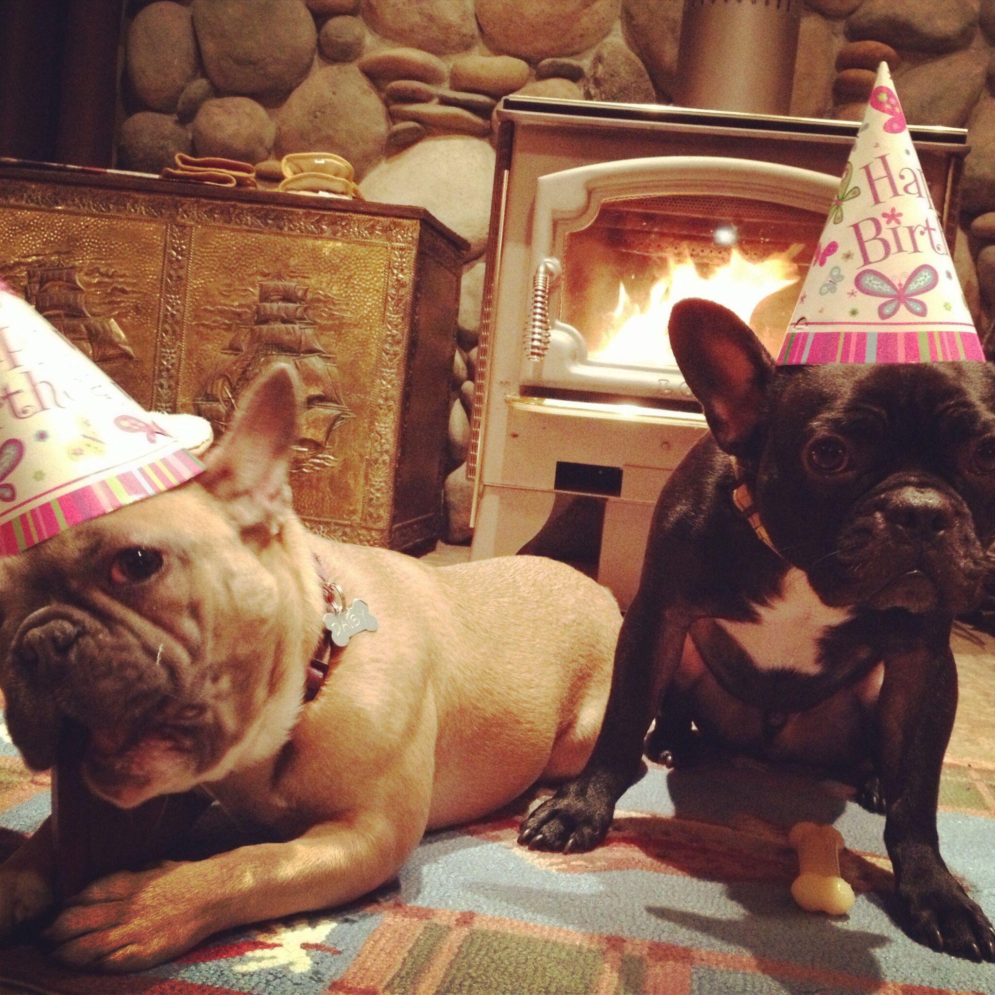 Birthday Frenchies!! <3