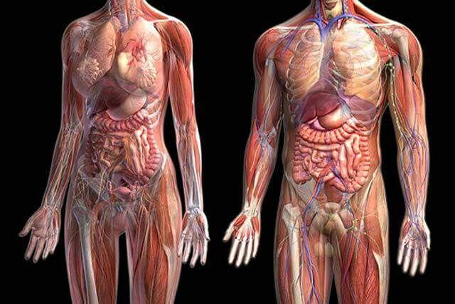 La #Anatomía es la ciencia de la forma y las estructuras organizadas ...