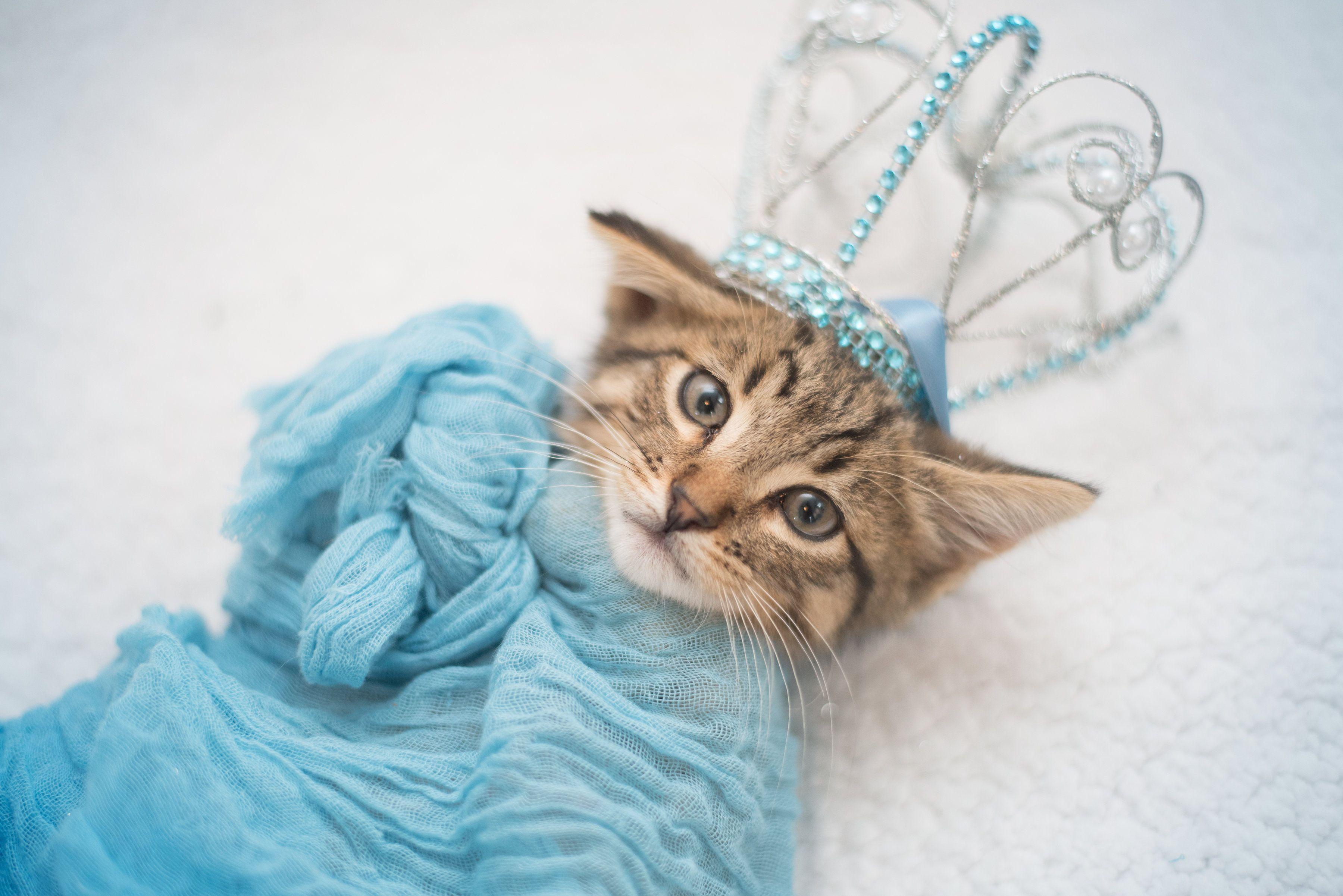 Family Stages Newborn Style Shoot For Their Kitten Newborn Kittens Cute Kawaii Animals Kitten
