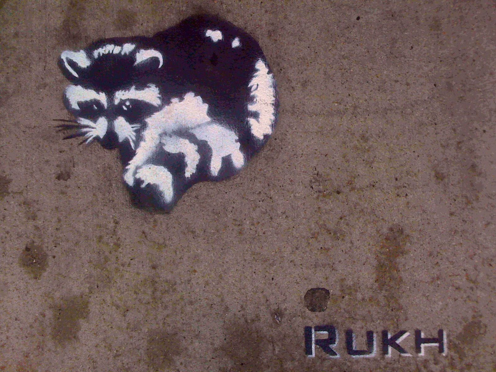Raccoon X Rukh