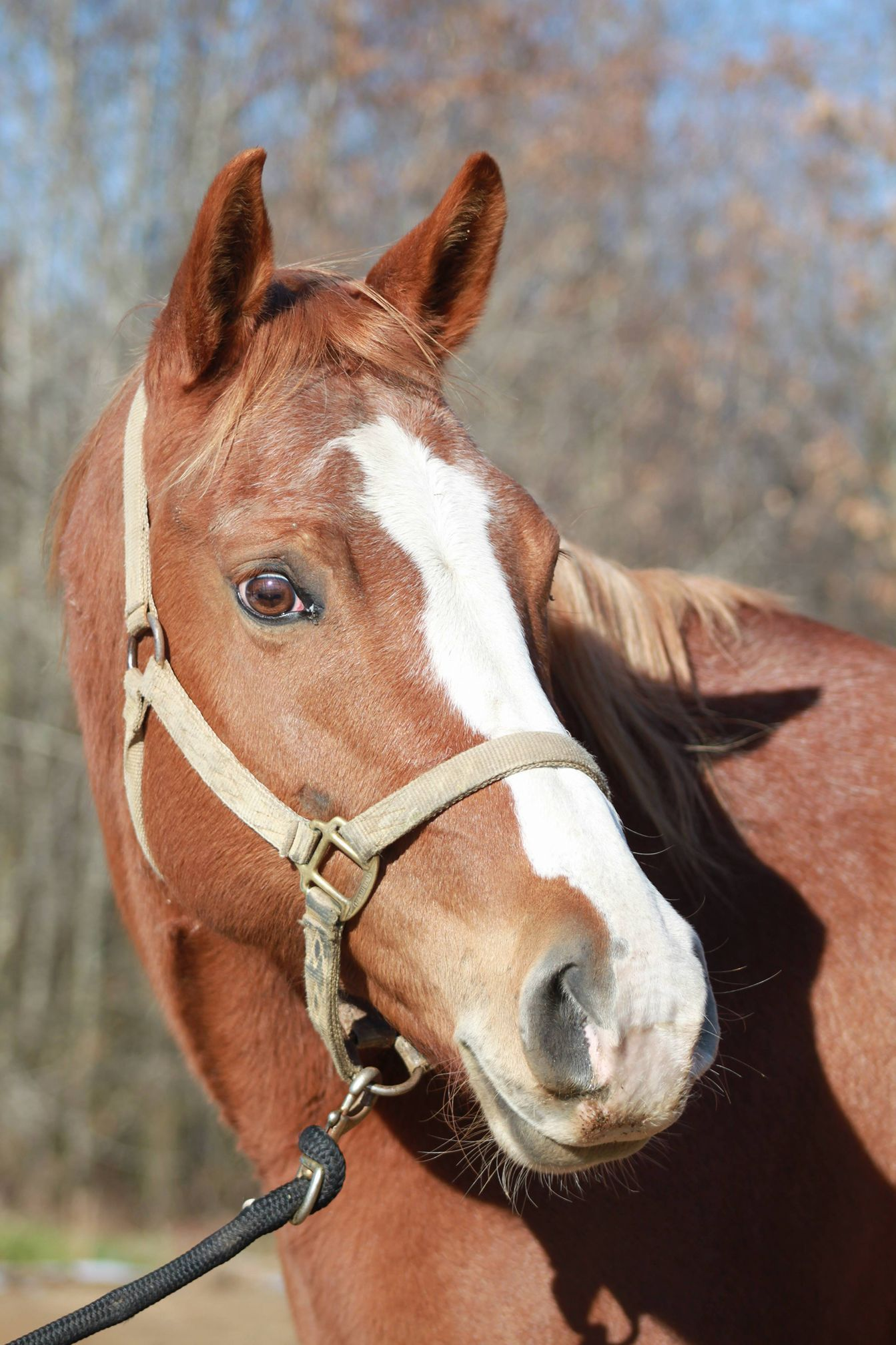14+ Wayward ranch animal sanctuary images