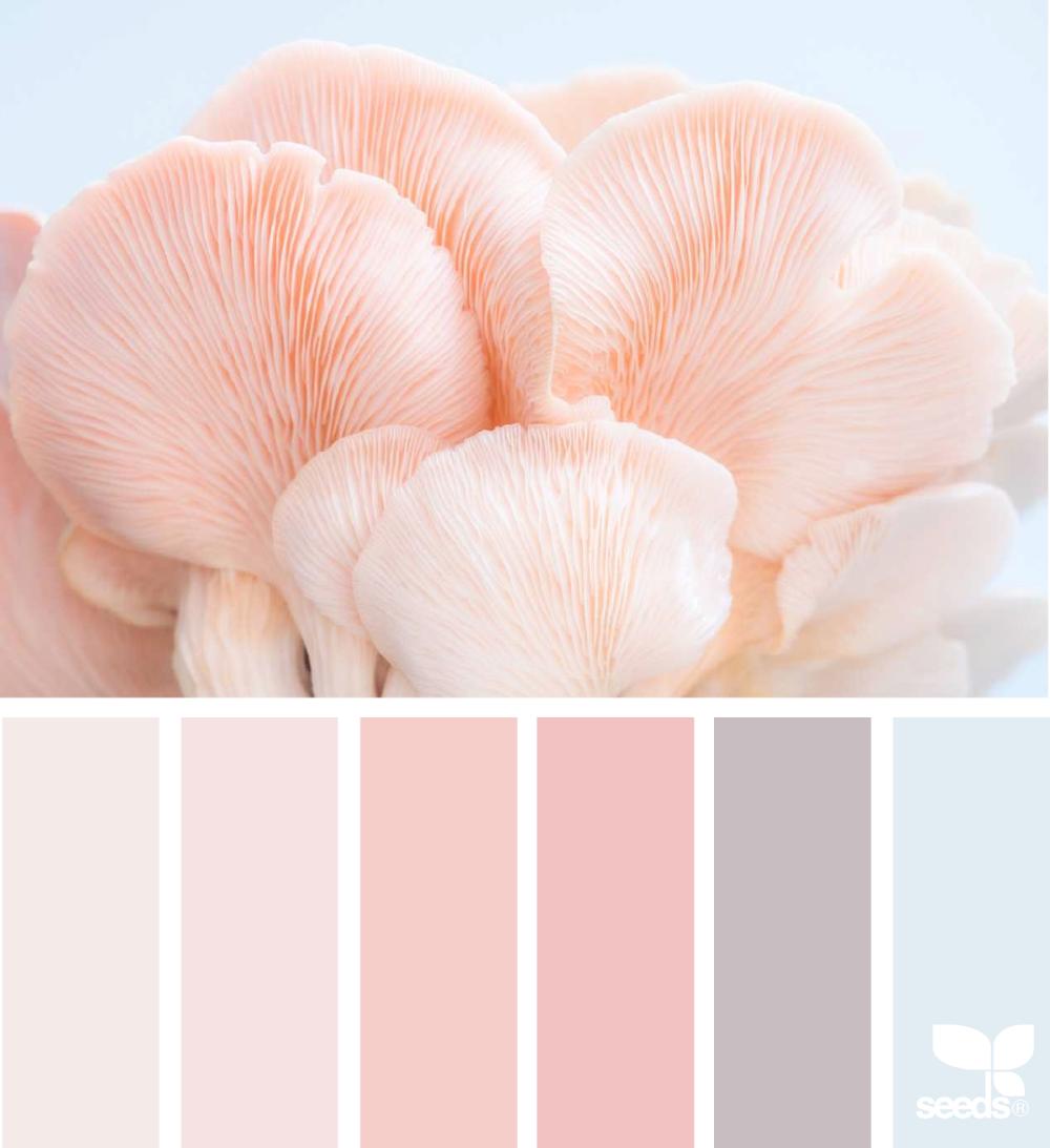 Color Nature Paletas De Color Rosa Paletas De Colores Pastel Gama De Colores Pastel