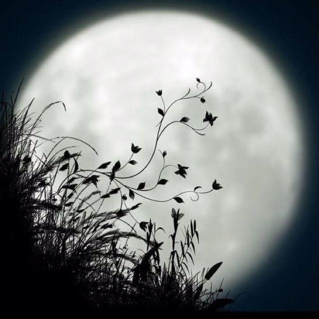 moon' flowers
