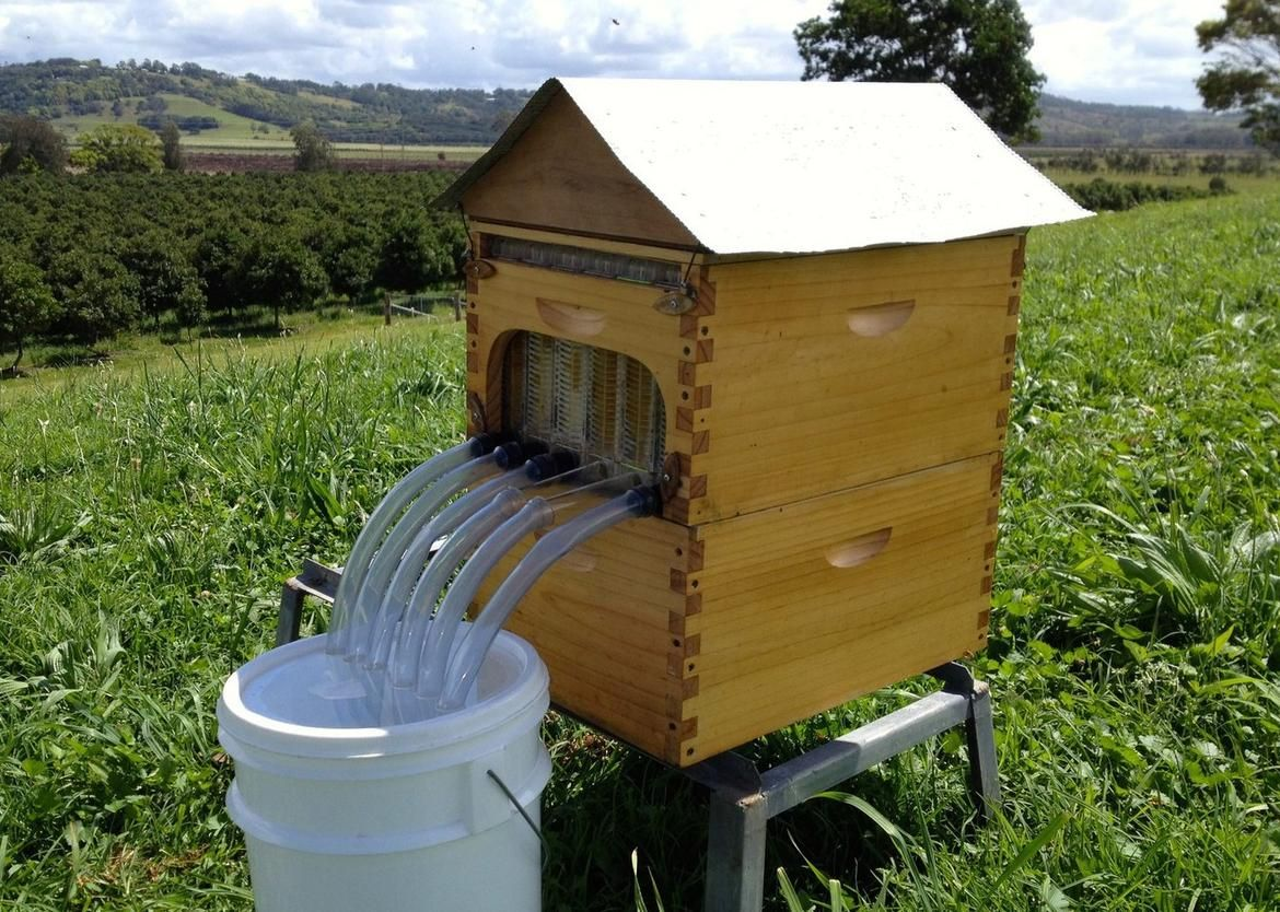The Flow Hive, set for a Kickstarter crowdfunding debut, introduces a  simple new way to harvest honey from a backyard beehive without stressing  the bees or ... - New Beehive Harvests Honey Without Bugging Bees (pictures) The