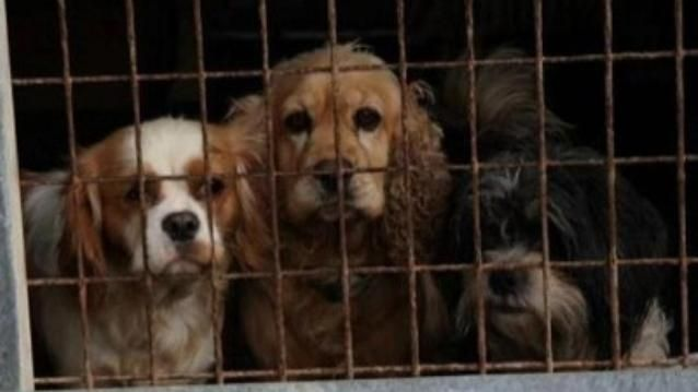 Dozens Of Dogs Seized By Rspca From Adelaide Hills Puppy Farm Find New Homes Dogs Puppies New Homes