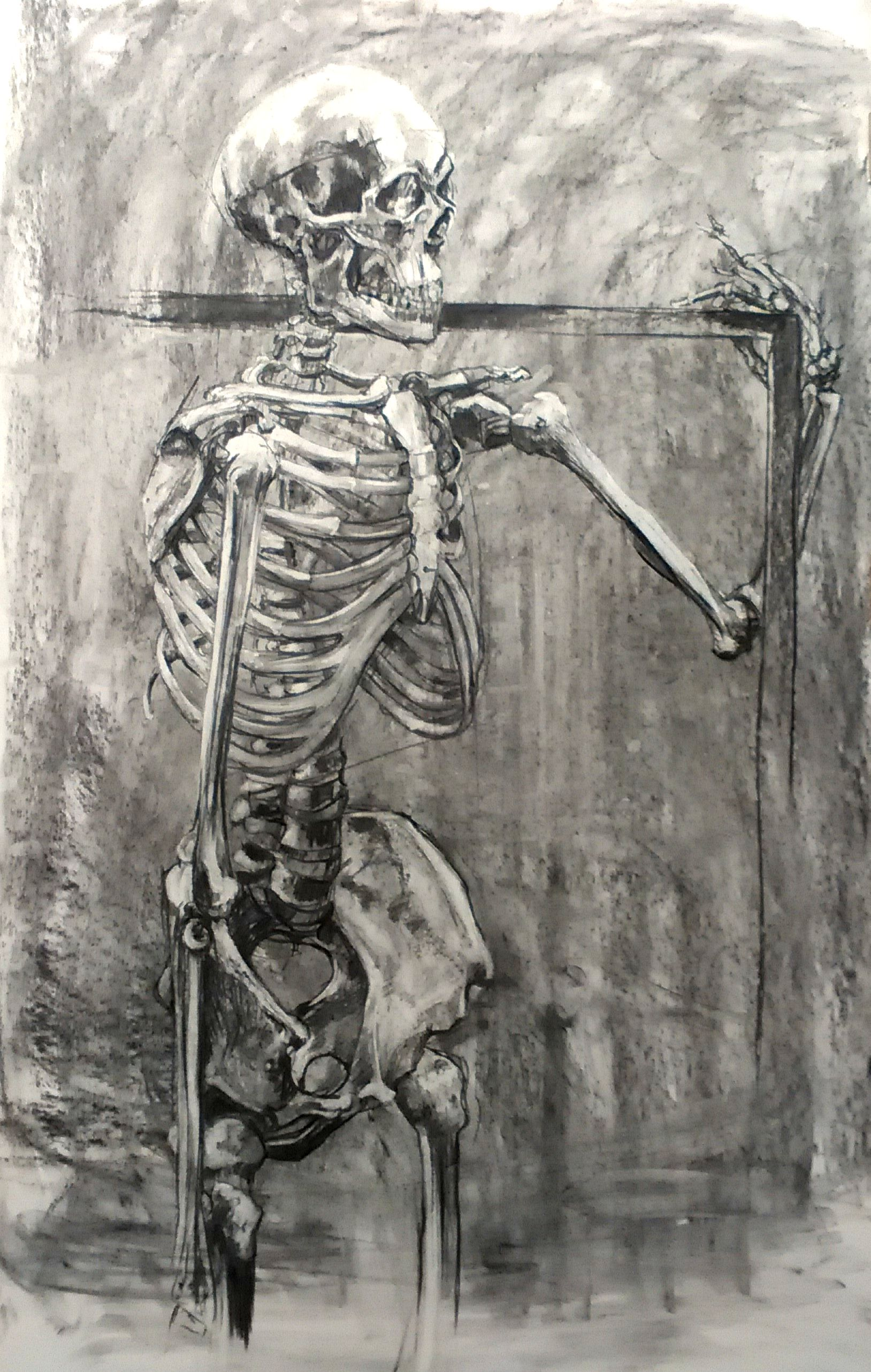Charcoal Skeleton With Images Skeleton Drawings Observational