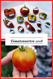 Blogger Tomaten Sorten Tomatensorten Tomaten
