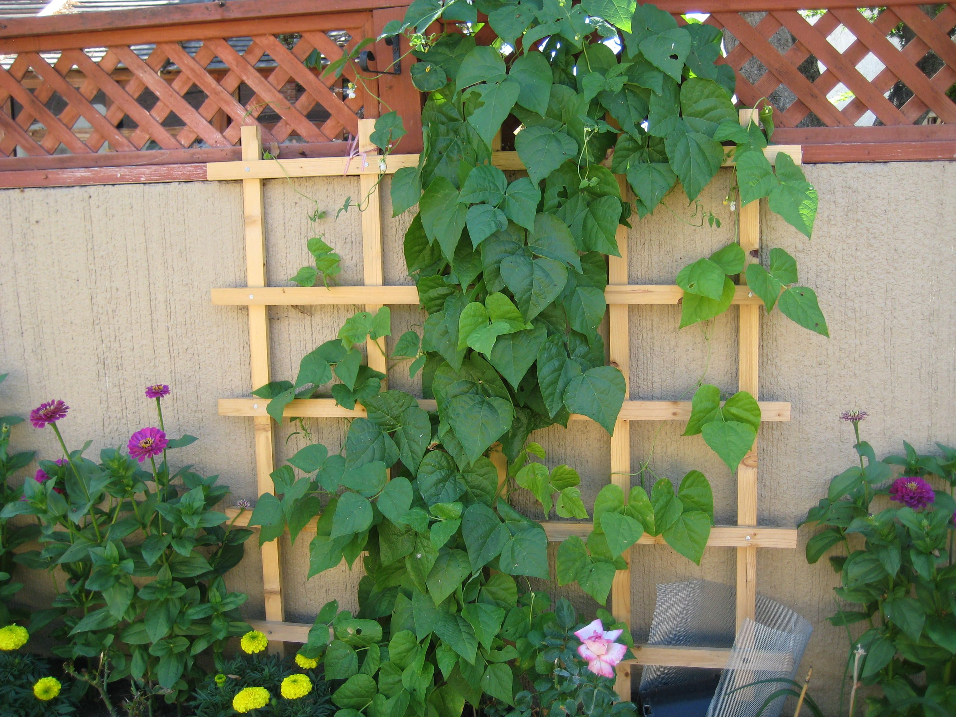 Easy Vertical Gardening Ideas For Beginners Small Backyard