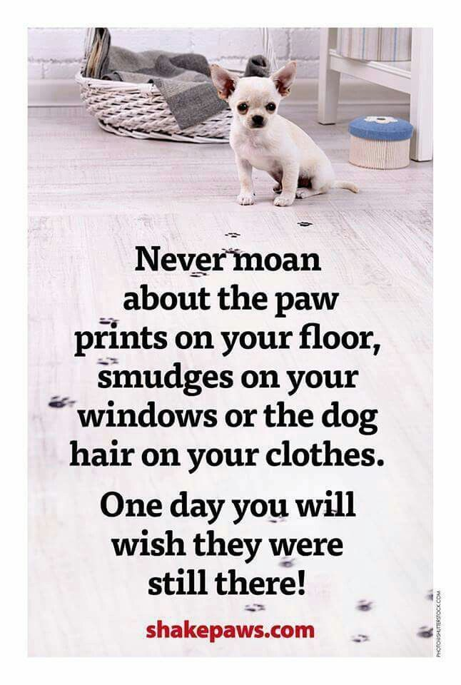 1000 Ideas About Miss My Dog On Pinterest Entlebucher Mountain