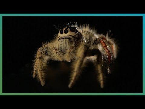 Videos Recomendados (51) - Rocambola-Seleccion de Noticias de Tecnologia en Internet