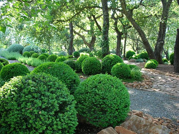 Add Shade And Serenity To Your Outdoor Space Boxwood Landscaping Landscaping Shrubs Boxwood Garden