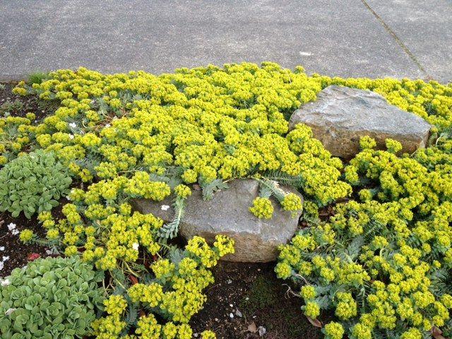 Pin By Misty Shaw On Parking Strip Garden Design Backyard Plants Front Yard Garden Garden Inspiration
