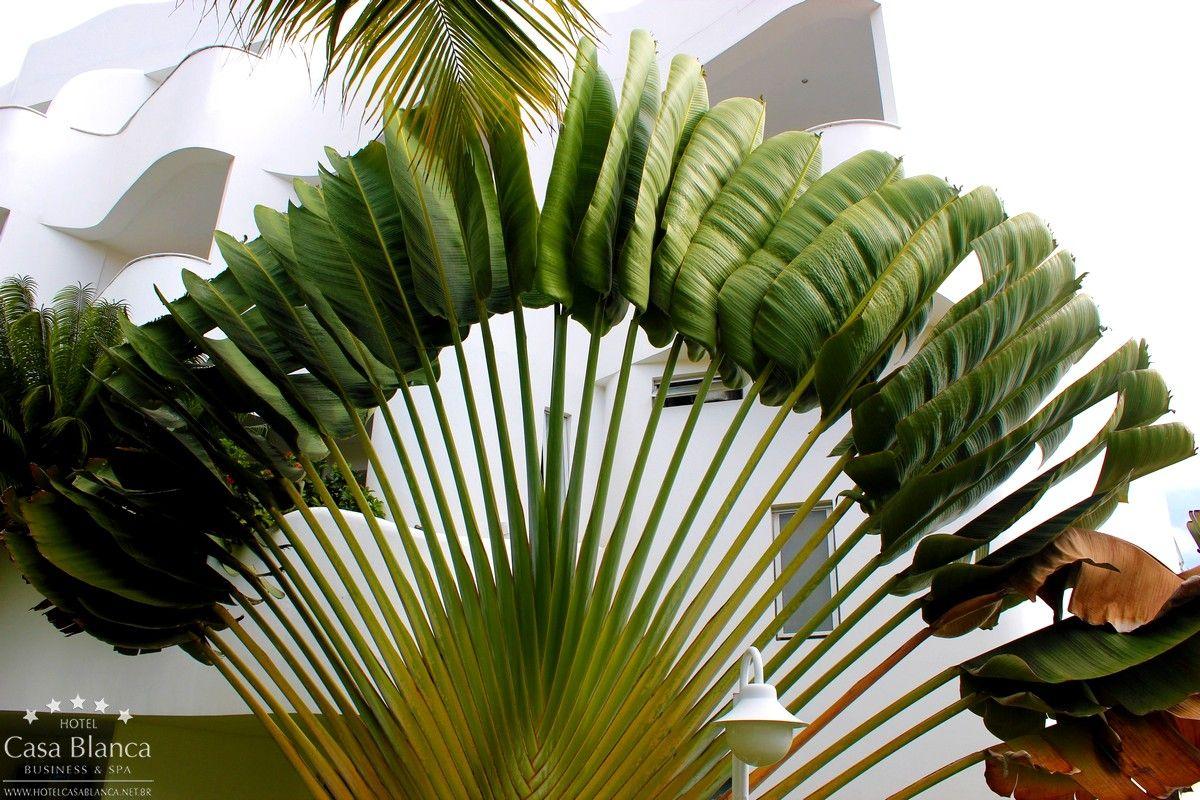 As folhas da palmeira se espalham como os raios do sol no litoral norte pernambucano. http://hotelcasablanca.net.br/