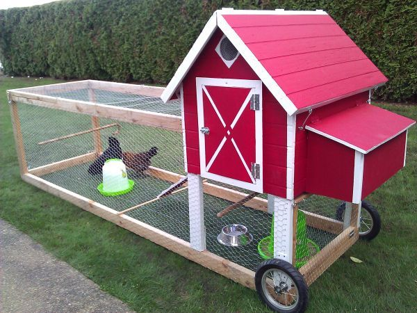 Morgan giesler chicken tractor for my garden for Portable chicken coop on wheels