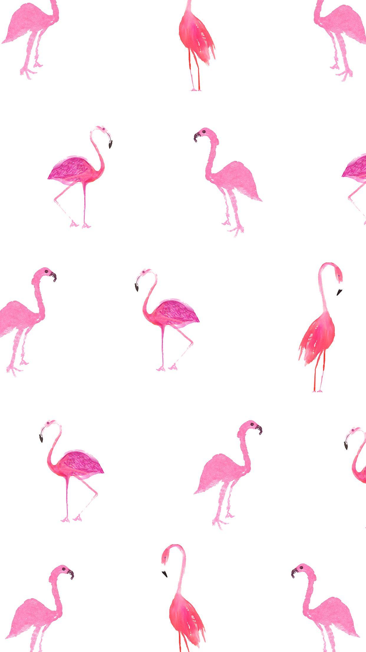 Background flamingo flamingos iphone wallpaper wallpaper - Mobile Wallpaper For Swimsuit Season Front Main