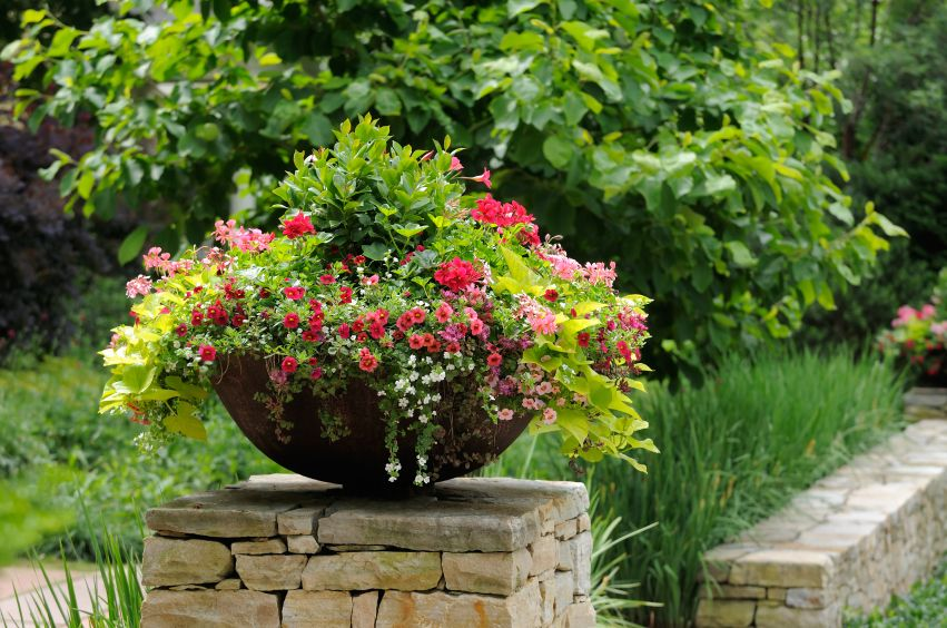 17 Best 1000 images about Flower Pots on Pinterest Gardens Midnight