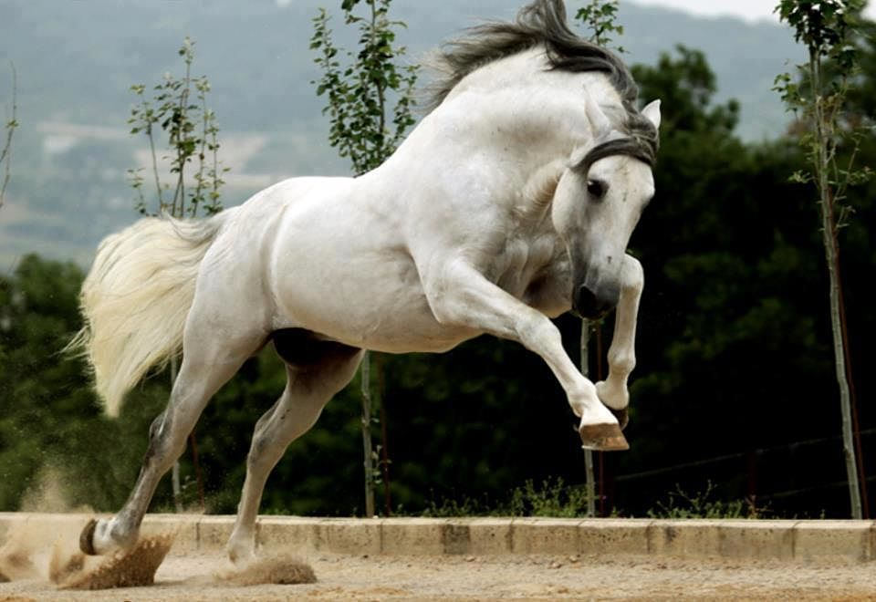 View All Images At أجمل خيول العالم صور Folder Horses Pretty Horses Horse Breeds