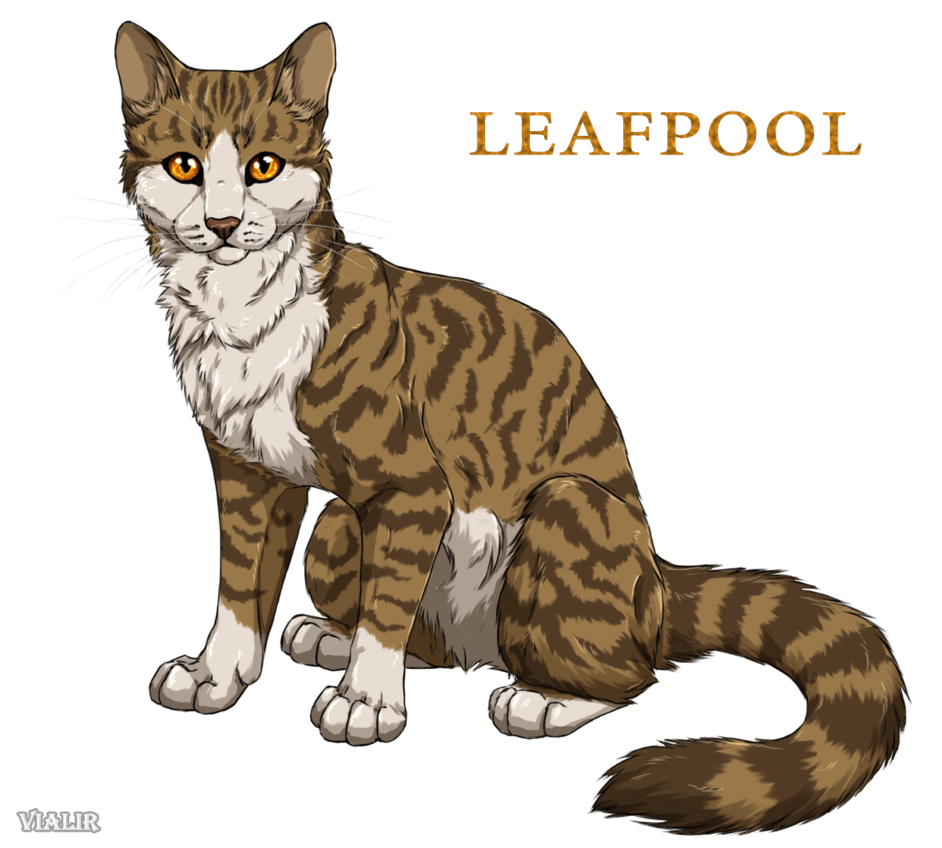 Leafpool The Former Medicine Cat Of Thunderclan She Had