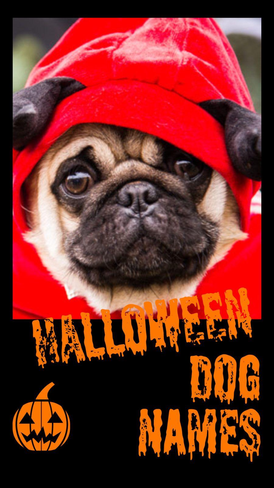 Halloween Dog Names Dog halloween, Dog names, Cute dog