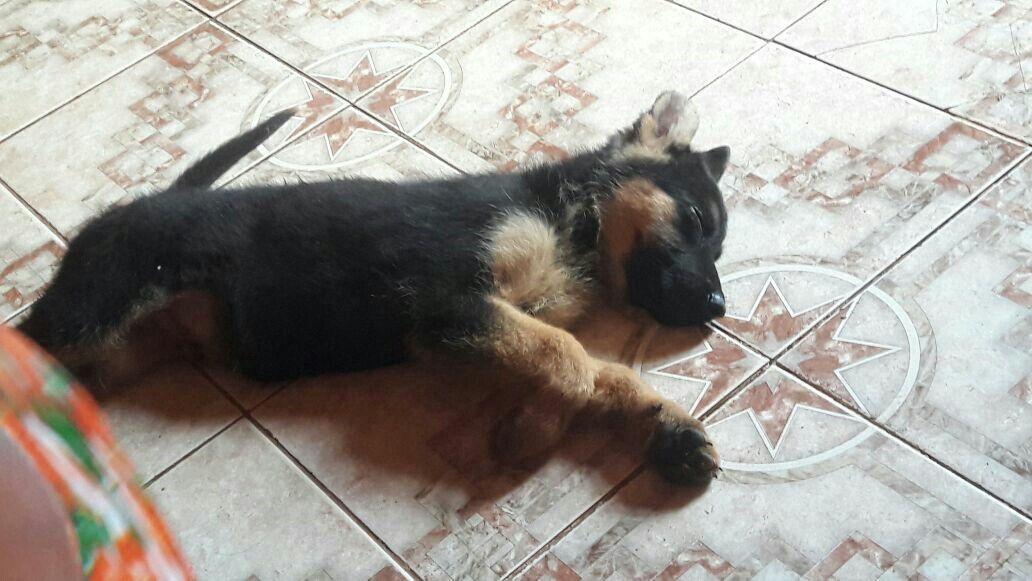Hermoso bebé durmiendo Rex