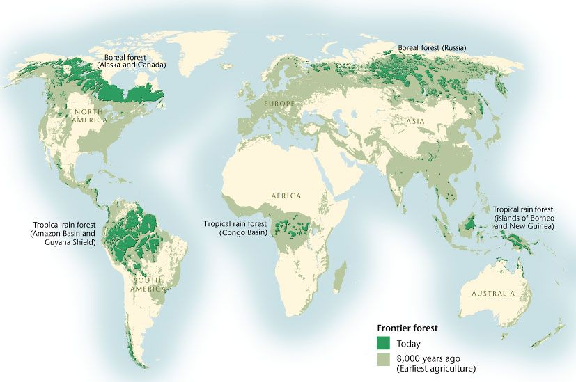 The Largest Remaining Intact Forests Are Found In Five Regions